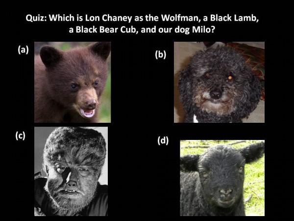 Milo, Wolfman, Lamb, Bear Cub